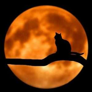 Full-Moon-Meditation-Yoga-500x500